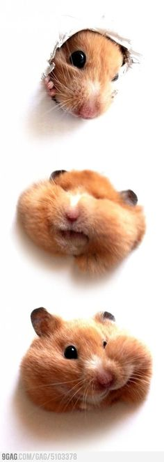 I love hamsters.  They're my life! I have 2 myself. :P