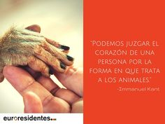 Ama a los animales, frases