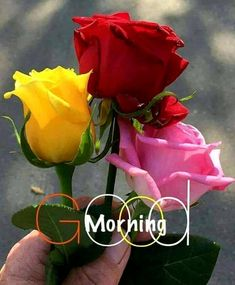 Good Morning In Hindi, Good Morning Picture, Good Night Image, Good Morning Good Night, Morning Pictures, Morning Wish, Monday Morning, Good Morning Flowers Rose, Beautiful Love Pictures