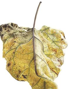 The leaves of Jess Shepherd: For The Last Two Years, I Have Been Painting Leaves That Tell A Story