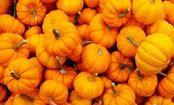 Pumpkin Corn Chowder Recipe | Care2 Healthy Living