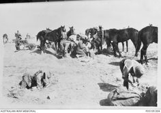 Lighthorsemen of the Australian Light Horse set out provisions of grain for their horses at a camp near Beersheba. Horses in the background eat from nose bags or wait patiently for their . War Horses, Lest We Forget, World War One, Ottoman Empire, Wwi, Sadness, Troops, Middle East, Warriors