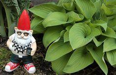 Nerd Gnome //    http://raspberryfisher.files.wordpress.com/2012/05/gnome1_8173.jpg