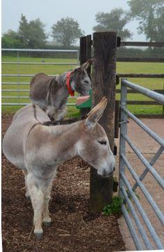 Donkey Sanctuary Sidmouth, Devon, near Alpine Park Cottages