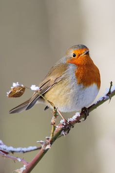Robin by Lee Adcock on 500px