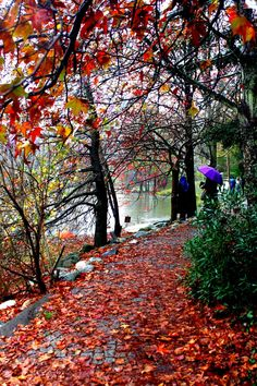 Arboretum,Istanbul... by Zeynep Gürel on 500px