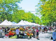 Farmer's Market Culture Broken Down: Who Belongs and Who Needs Booting