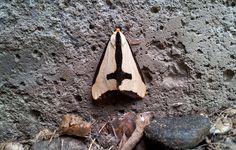 Haploa clymene - 'Clymene Moth'