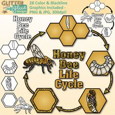 Honey Bee Life Cycle Clipart - Glitter Biology Life Science Lesson Plan Ideas!