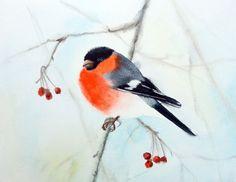 Bullfinch Bird on Branch - watercolour, wild bird watercolour, birdwatcher, wild bird art, bird art (2016) Watercolor by Olga Beliaeva | Artfinder