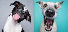 cachorros_expressivos_dest