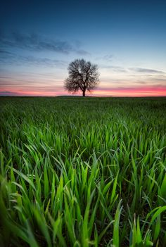 Alone in the field photo by Jasmina_K on Envato Elements Sky Landscape, Fields, Grass, Poster Prints, Sunset, Water, Plants, Photography, Travel