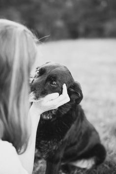 Merlin the Labrador by Willow & Co. | Sydney Pet Photographer | Pretty Fluffy