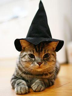 Aww sweet Halloween witch cat :)