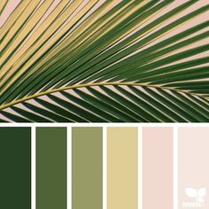 today's inspiration image for { color frond } is by @thebungalow22 ... thank you, Steph, for another fantastic #SeedsColor image share!