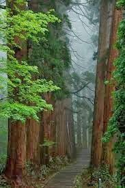 Beautiful forest trail – Japan   Express Photos