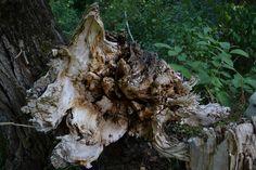 Part of Tree Amazing Nature, Herbs, Animals, Animales, Animaux, Herb, Animal, Animais, Medicinal Plants