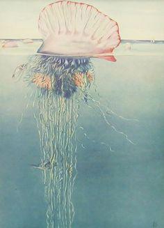 Portuguese Man-of-War, 1930s Antique Fish Print