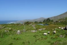 Allihies - a beautiful small village in Ireland. Ocean, mountains and friendly people. :-)