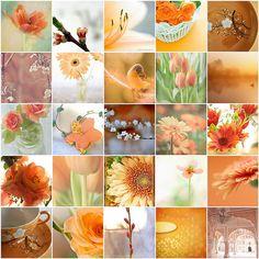 Peachy-orange -- feels like spring!   Flickr - Photo Sharing!