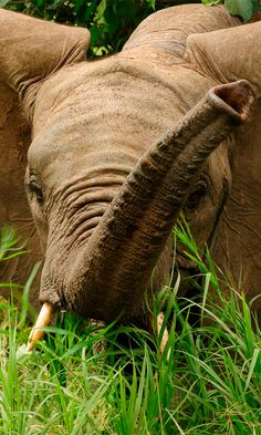 One of the best locations to see elephants in Mozambique is the Maputo Elephant Reserve #travelafrica