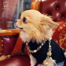 BLINGED-OUT CHIHUAHUA