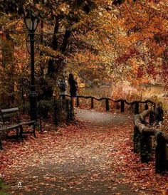 Autumn in Central Park Credit: unknown Conservatory Garden, Autumn In New York, Pretty Pictures, Pretty Pics, What A Wonderful World, Central Park, Wonders Of The World, Paths, New York City