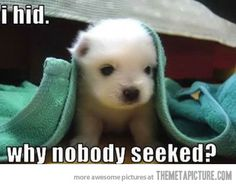 """Being a recovering cynic, this is the only """"cute"""" picture in a long time that's made me """"Awww!"""""""
