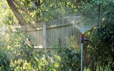 The average garden needs an inch of water per week. But what does that mean?