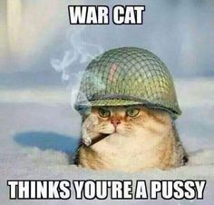 You Can Haz Memes? 31 Hilarious Cat Memes From Around The Internet (Slide Cute Funny Animals, Funny Animal Pictures, Funny Images, Cute Cats, Funniest Animals, Funny Cat Memes, Funny Cats, Funny Humor, It's Funny