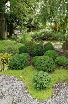 """In a private Sussex garden open to the public, for charity, under the NGS """"Yellow Book"""" scheme."""