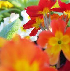 Variazioni sui colori caldi: rosso e giallo. Flowers