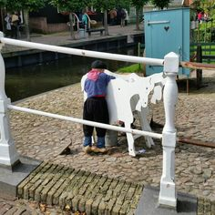 Little Dutch farmer boy milking goats