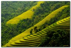 """""""Mu Cang Chai - Viet Nam"""" by Nguyen Anh, via 500px."""