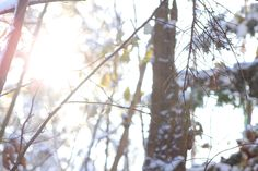chasing light Chasing Lights, Art Photography, Plants, Outdoor, Image, Photography, Outdoors, Fine Art Photography, Plant