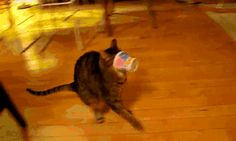 My favorite cat gif | For more #cool #funny #gif #gags #comic #cute #adorable #meme #humor like this , visit CheeseFeed.co/ :)