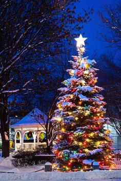 christmas lights Imagine having this big and beautiful Christmas tree in your yard! Diy Christmas Lights, Decorating With Christmas Lights, Merry Little Christmas, Outdoor Christmas, Christmas Decorations, Holiday Decorating, Christmas Tree Colored Lights, Christmas Lights Outside, Xmas Lights