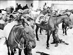 Rhodesia: The Ultimate Photographic Resource! - Page 4 - The FAL Files Military Gear, Warfare, Scouts, Soldiers, Colonial, Landscapes, African, Bow, Horses