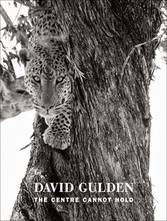The Arts by Karena: The Centre Cannot Hold by David Gulden Peter Beard, David, Clever Design, Book Photography, Modern Man, Pet Portraits, Centre, Hold On, Lion Sculpture