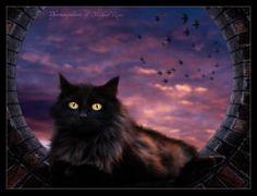 Cat art by Michael-Rayne.deviantart.com on @deviantART