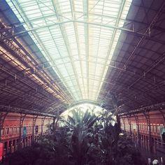 "@oliviasoaps en Instagram: ""#madrid jungle """