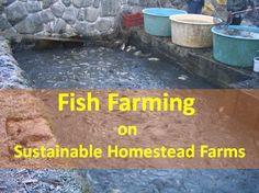 Aquaculture: Fish Farming on Sustainable Homestead Farms Sustainable Farming, Urban Farming, Sustainability, Sustainable Living, Catfish Farming, Aqua Farm, Agriculture Farming, Goat Farming, Homestead Farm