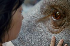 """""""Okja"""" - Closing the festival is Okja, interestingly, a Netflix-produced film. Starring Tilda Swinton, Jake Gyllenhaal, Paul Dalo, Lily Collins and Seohyan An, this is a monster film of a very different heart. Okja is super pig developed by a corporation as a new breed of animal for consumption and cared for by Mija (An) in a mountainous region of South Korea. When Ojka is taken away to be put on show, Mija refuses to let her best friend go, and hence a wonderful chase, with notes of social…"""