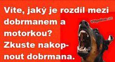Srandovní obrázky - dobrman Humor, Jokes, Lol, Husky Jokes, Humour, Funny Photos, Memes, Funny Humor, Comedy