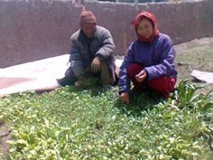 Promoting balanced diet in remote villages - Kitchen #garden by women's Self-Help Groups in the #Himalayas - Pragya's initiative under health & #nutrition programme #unfaozhcgarden http://www.pragya.org/improved-health-and-nutrition.php