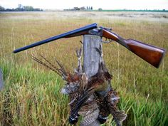 Pheasants and Shotgun
