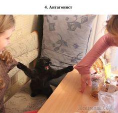 100 самых ценных снимков котов. Всех времен и народов (Часть 2)