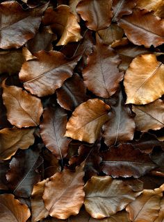 Leathery autumn leaves.