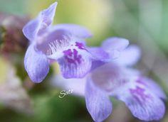 �� * #カキドオシ #花 #忘れない  #花アルバム #花フレンド  #ザ花部 #花倶楽部  #花マクロ部 #花撮り隊  #花の世界 #花好き  #はなふぉと #花の写真  #花のある暮らし #植物  #写真 #写真好き  #はなまっぷ #私の世界  #微笑みふりまき隊  #スローライフ  #リラックスタイム  #flower #macroflower #flowerslovers  #instaflower #instaphoto #instapic  #canon http://gelinshop.com/ipost/1515687686320879391/?code=BUIzeuVlvcf