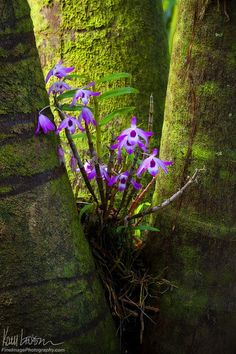 Fluorescent Flowers framed by moss by Kory Lidstrom
